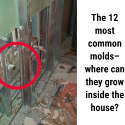 The 12 most common molds in houses – where can they grow inside the house?