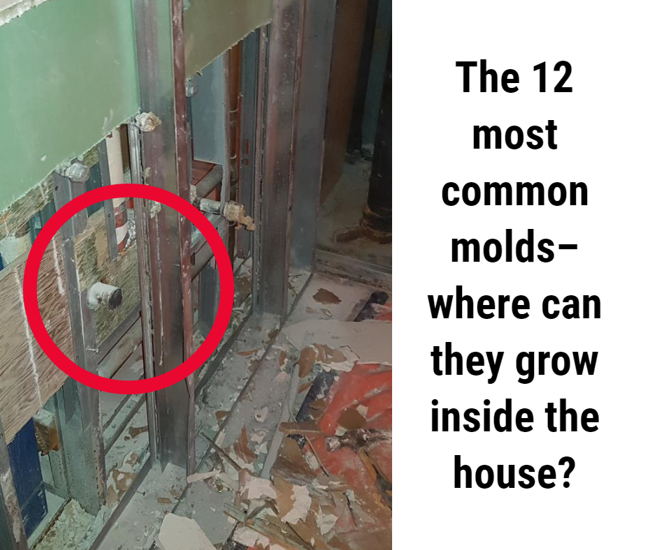 The 12 most common molds, where can they grow inside the house?
