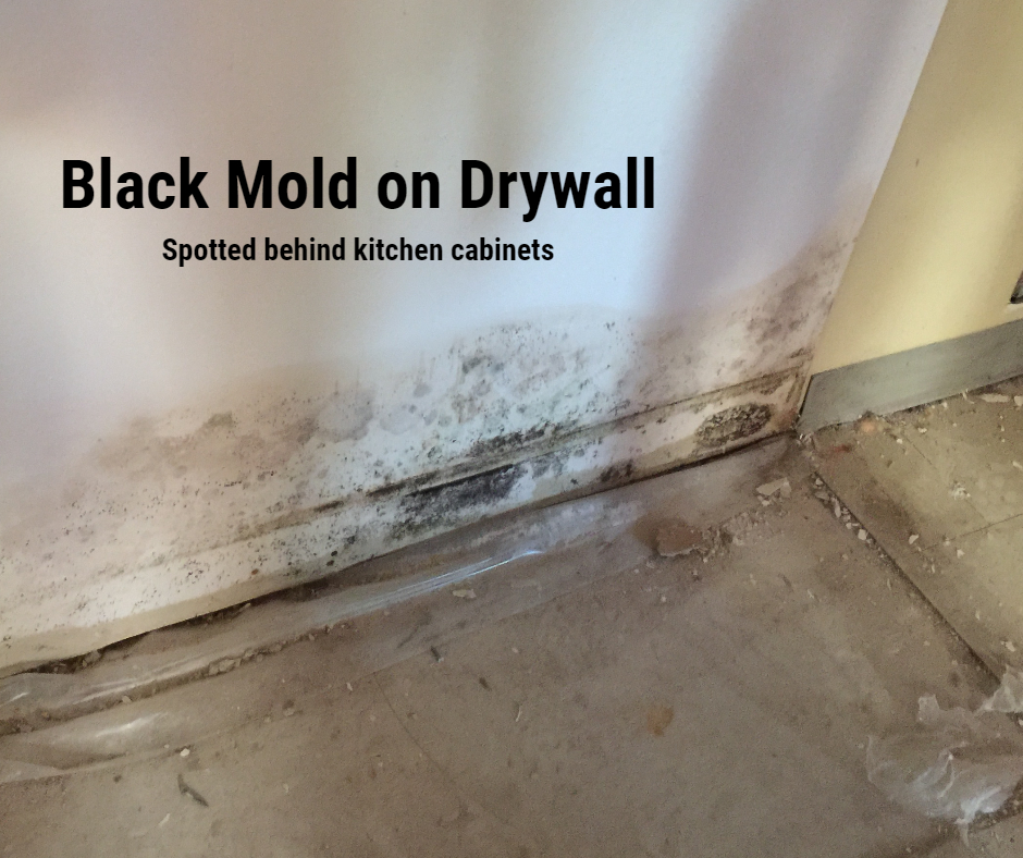Black Mold on drywall, spotted behind kitchen cabinets