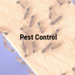 Royal Pest Control