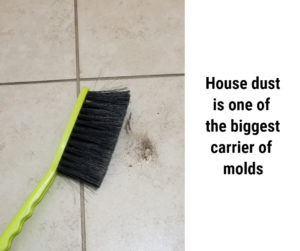 18 types of mold- less common indoors, some enter your house with dust and wind