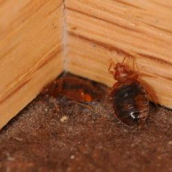Advantage Pest Control Inc.
