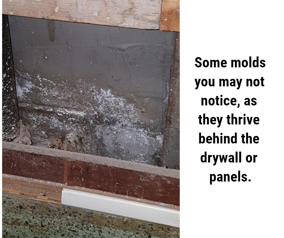 Some molds you may not notice, as they thrive behind the drywall or panels.